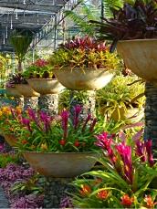 Bowls of bromeliads