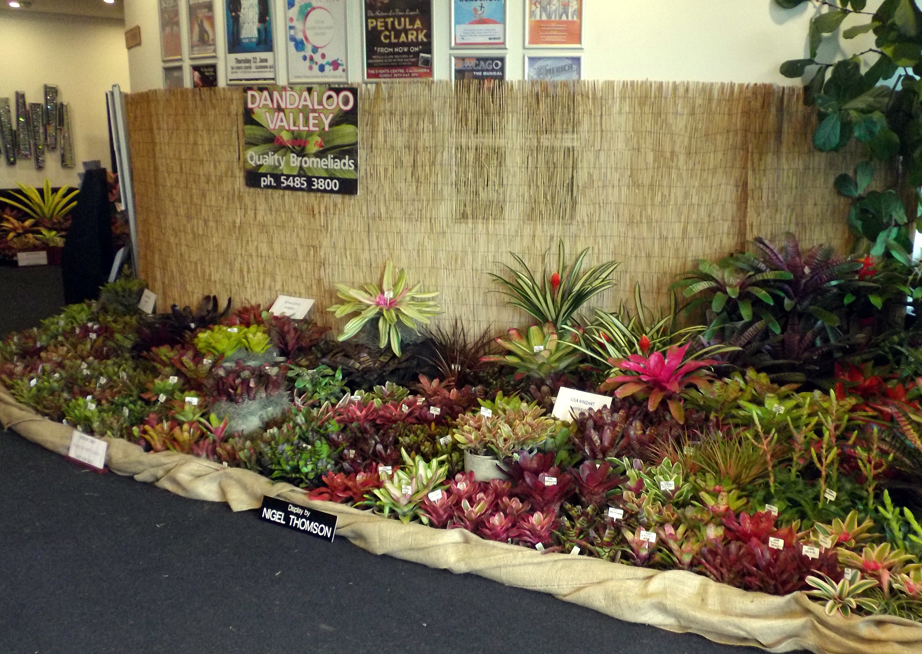 Sunny Broms Conference Displays