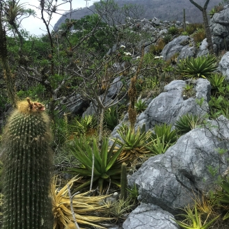 Typical countryside: Wildfire Garden Mexican Adventure