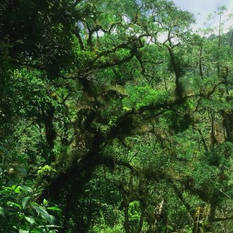 Tree with tilandsia: Wildfire Garden Mexican Adventure