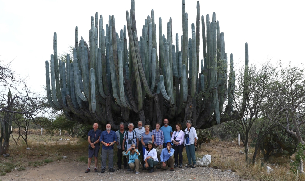 Giant Cactus - Wildfire Garden in Mexico 001