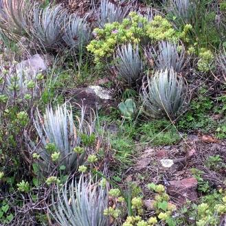Natural landscape: Wildfire Garden Mexican Adventure